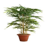 Seidenpflanze Bambus, grün, Höhe 150cm