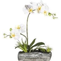 Phalaenopsis-Arrangement in Polyresinschale