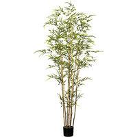 Bambus, UV-beständig