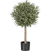 Olivenkugelbaum