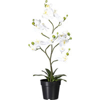 Phalaenopsis, real touch